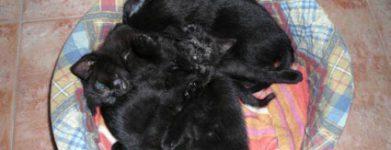 Cuccioli nerini