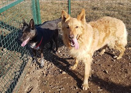 Barney e Stella