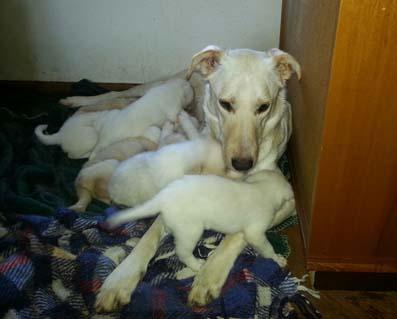 2 cucciolate