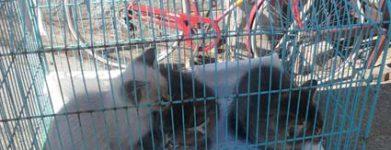 Liberato 3 cuccioli