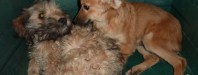 2 cuccioli maschi