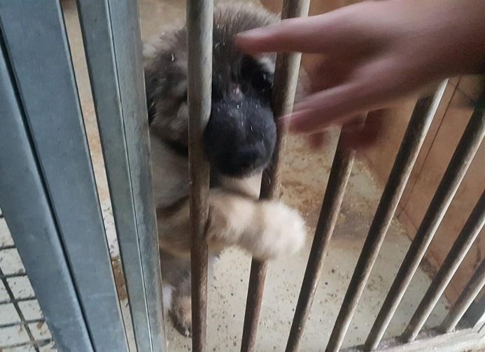 Cucciolo stupendo