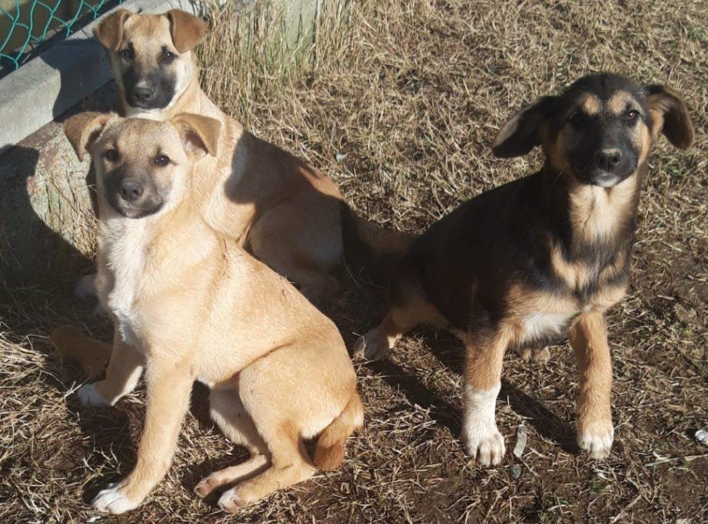 3 cucciole femmine