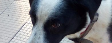 il cane triste