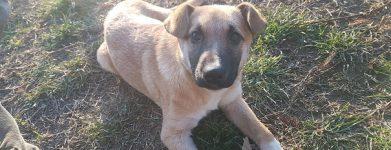 L'ultima cucciola