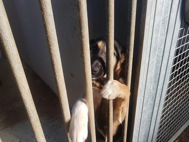 Liberata II cucciola