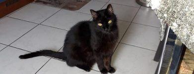 Gatto di 16 anni