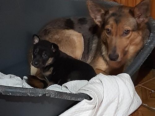 La cucciola Nora